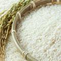 احتکار و دلالی، قیمت برنج را دو برابر کرد!