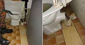 حمله باورنکردنی مار غول پیکر به صاحبخانه در توالت!