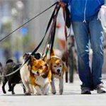 برخورد قاطع با پدیده سگ گردانی در کرج